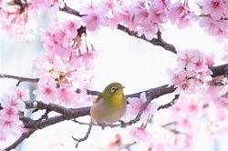 英語の発音 カタカナ語 バード bird